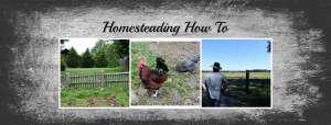 homesteading how to